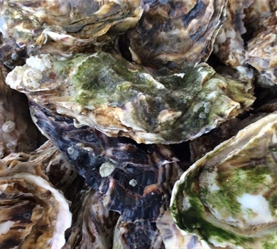 >Blakeney Point Oysters